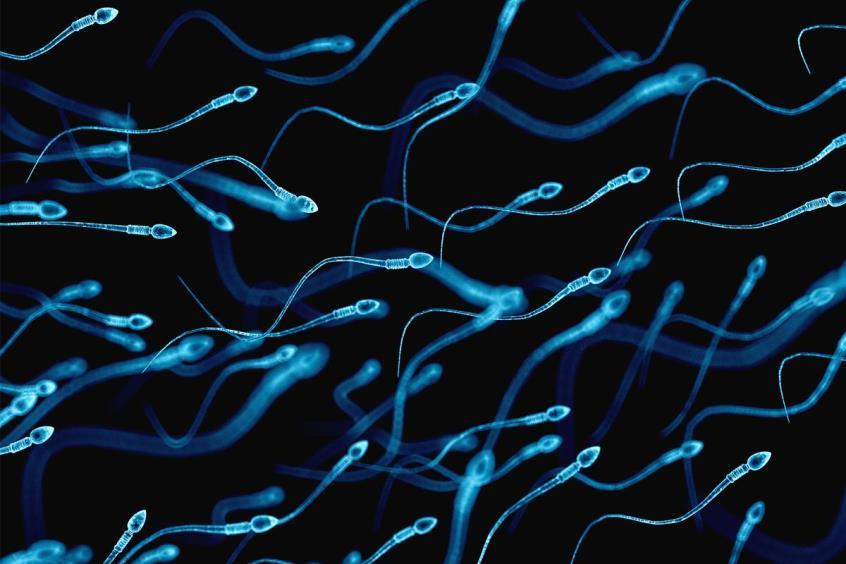 Καλύτερη η ποιότητα του σπέρματος για τους (με μέτρο) χρήστες κάνναβης