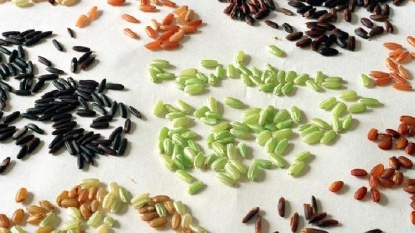 Επιστήμονες δημιούργησαν γενετικά τροποποιημένο ρύζι, πλούσιο σε αντιοξειδωτικά